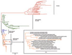 Thumbnail of Phylogenetic analysis of avian influenza subtype H10 hemagglutinin (HA) sequences. HA sequences of all subtype H10 viruses deposited in GenBank were downloaded, and a neighbor-joining tree was created by using Jukes-Cantor as the genetic distance model on Geneious 5.14 software (Biomatters Ltd, Auckland, New Zealand) and a phylogenetic tree drawn by using FigTree version 1.3.1 (http://tree.bio.ed.ac.uk/software/figtree/). A representative HA sequence from the subtype H10N7 viruses d