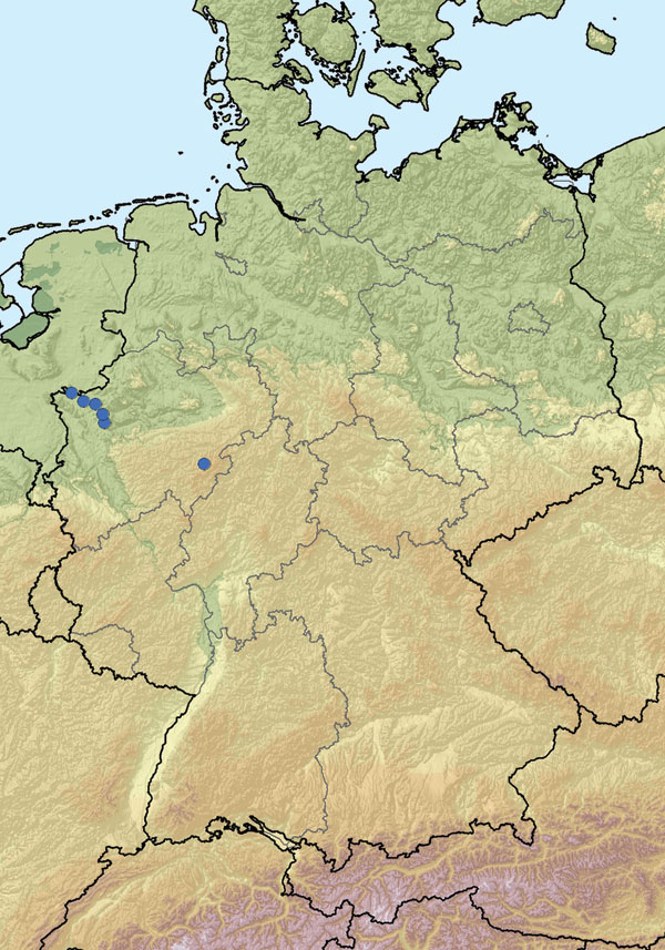 Location of farms with PCR-positive cattle (blue dots) in North Rhine-Westphalia, Germany.
