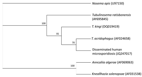 Cladogram of Tubulinosematidae spp. based on small subunit ribosomal RNA gene sequences. Nosema apis was added as an outgroup. The phylogenetic tree was created by using the quartet puzzling maximum likelihood program TREE-PUZZLE (www.tree-puzzle.de). The numbers at the nodes are quartet puzzling estimations of support to each internal branch.