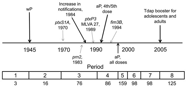 Timeline of pertussis vaccine introduction in the United States and appearance of alleles within the Bordetella pertussis population, 1935–2009. The 8 periods used in this study are indicated at bottom; numbers below indicate number of selected strains during that period (N = 661). wP, whole-cell pertussis vaccine; MLVA 27, multilocus variable number tandem repeat analysis type 27; aP, acellular pertussis vaccine; Tdap, tetanus-diphtheria-aP.