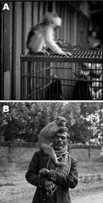 Thumbnail of The interface between nonhuman primates, birds, and humans. A) A young, recently captured leaf monkey perched on a cage containing birds in a wet market in Java. B) A man and his performing monkey in Bangladesh. Reprinted with permission from Lynn Johnson, 2012.