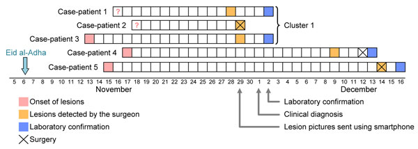 Natural history of Orf virus infection and diagnosis in 5 persons who butchered or prepared lambs as part of a religious practice for Eid al-Adha (the Muslim Feast of Sacrifice), Marseille, France, 2011. Arrows indicate events for the first cluster of cases among 3 related persons (a brother and sister and their aunt).