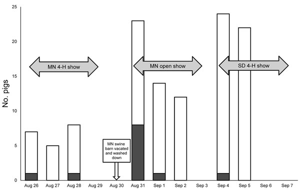 Show pigs with nasal swab specimens positive for influenza A virus by real-time reverse transcription PCR, Minnesota and South Dakota state fairs, 2009. MN, Minnesota; SD, South Dakota. White, total number of pigs swabbed; gray, pigs testing positive for influenza A by real-time reverse transcription PCR.