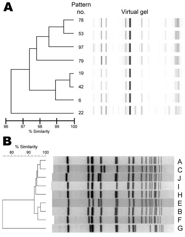 Methicillin-resistant Staphylococcus aureus sequence type 239-III isolates, Ohio, USA, 2007–2009, based on A) repetitive element PCR (rep-PCR) and B) pulsed-field gel electrophoresis. Virtual gel results are shown for 8 DiversiLab System (bioMérieux, Durham, NC, USA) rep-PCR patterns. Pattern numbers assigned are unique to the Ohio State University Wexner Medical Center.