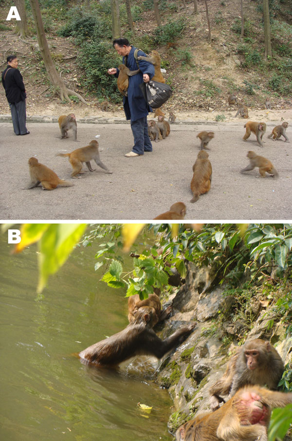Potential zoonotic and waterborne pathways of parasites in Qianling Park, Guiyang, China. A) Close contact of rhesus monkeys with humans. B) Potential contamination of recreational water with pathogens from rhesus monkeys.