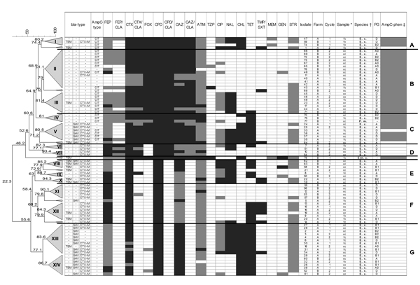 Phenotype distribution and dendrogram of 78 enterobacteria isolates from broiler chickens at the slaughterhouse, Germany, 2010. The dendrogram was generated by the unweighted pair-group method with arithmetic mean and Pearson correlation; trees were collapsed at a cutoff value of 80%. CEP, cefepime; FEP/CLA, cefepime/clavulanic acid; CTX, cefotaxime; COX, cefoxitin; CPP, cefpodoxime; CTX/CLA, cefpodoxime/clavulanic acid; CAZ, ceftazidime; CAZ/CLA, ceftazidime/clavulanic acid; ATM, aztreonam; TZP