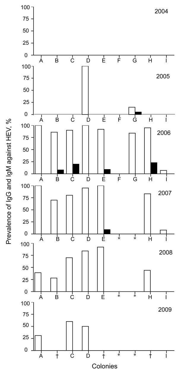 Prevalence of IgG (white bars) and IgM (black bars) against hepatitis E virus (HEV) in monkey facility, Japan, 2004–2009. *Monkeys were moved to another animal facility; †specimen not available.