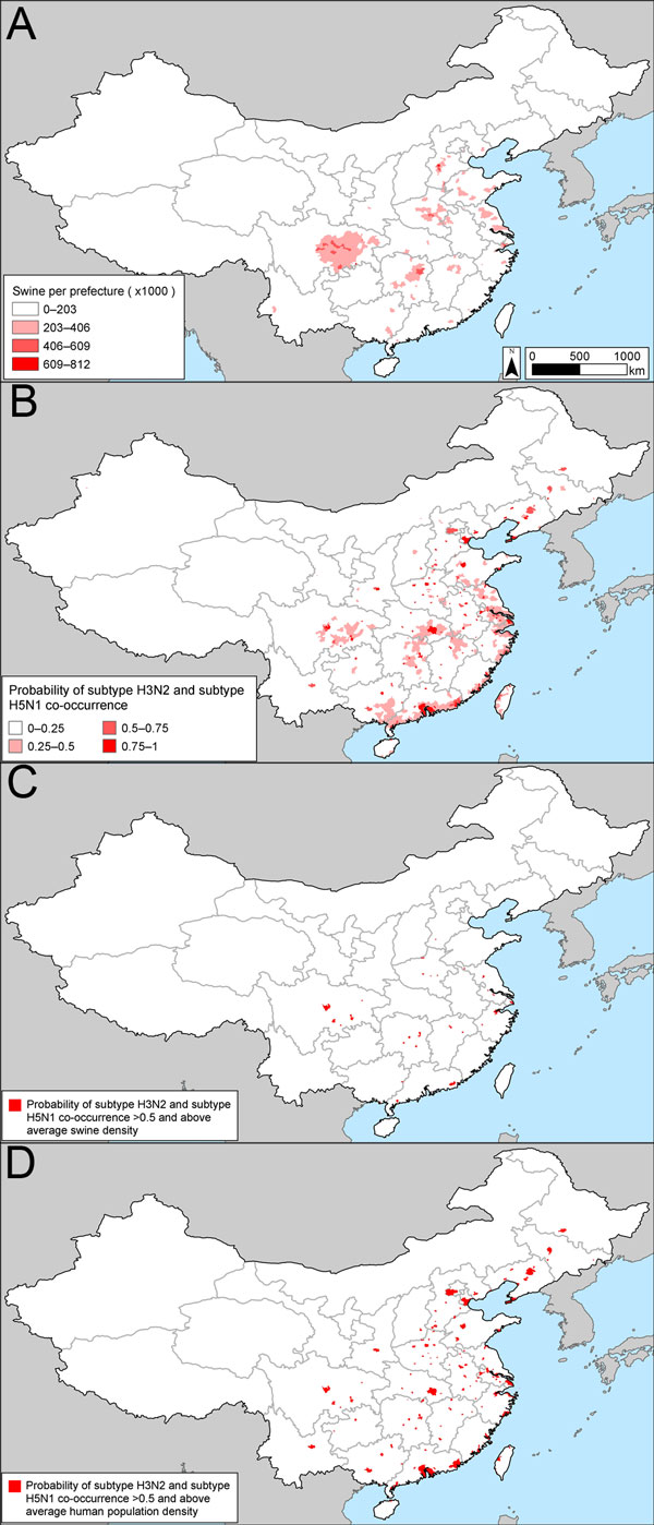 Potential influenza reassortment areas in People's Republic of China determined by using the influenza virus subtype H5N1 outbreak dataset. A) Density of swine. B) Spatial model of the risk for subtype H3N2 and H5N1 co-occurrence according to the outbreak dataset. C) Areas with a probability of subtype H5N1 and H3N2 co-occurrence >50% and above average swine density. D) Areas with a probability of subtype H5N1 and H3N2 co-occurrence >50% and above average human population density. See Tech