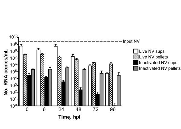 ′No evidence of productive Norwalk virus (NV) replication in 3-dimensional intestinal aggregates by quantitative reverse transcription PCR analysis. Supernatants (sups) and cell pellets were harvested for RNA at 0, 6, 24, 48, 72, and 96 hours postinoculation (hpi) with live and inactivated NV and analyzed by quantitative reverse transcription PCR. There was no significant increase (p>0.05) in NV RNA copy number over time in the supernatants or cell pellets relative to input virus.