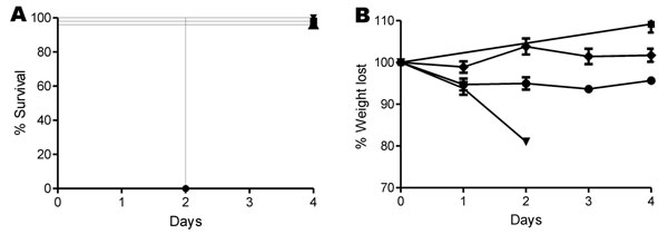 A) Survival and B) percentage of weight lost in mice over 4 days after infection with Clostridium difficile. Male C57/B6 mice were infected with C. difficile spores for strains M7404 (triangles), JGS6133 (078) (diamonds), or A135 (circles); phosphate-buffered saline (squares) was used as control. Error bars in panel B indicate SEM.