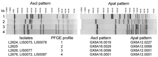 Four AscI and 4 ApaI pulsed-field gel electrophoresis (PFGE) profiles (identified at the time the research was performed) displayed by Listeria monocytogenes clinical isolates (L2624, L2625, L2626, and L2676) and isolates from food or environmental samples (LIS0072, LIS0075, LIS0077, LIS0078, and LIS0087) associated with the 2011 listeriosis outbreak traced to cantaloupe. PFGE profiles 3 and 4 differ by ≈40-kb shift in 1 band in the AscI pattern, likely related to the loss or acquisition of the