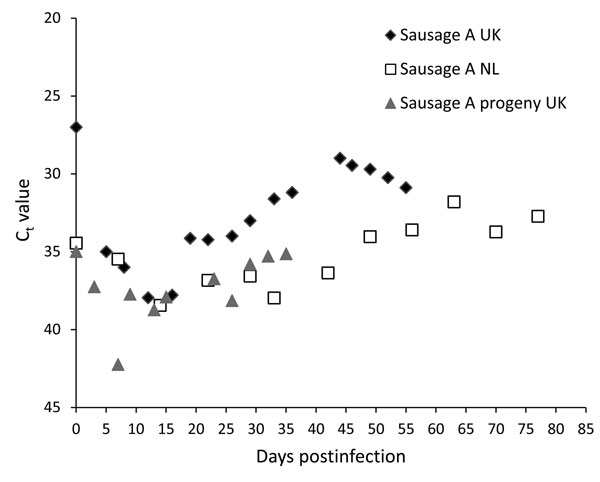 Cycle threshold (Ct) values detected by real-time reverse transcriptase PCR for hepatitis E virus–positive supernatant of 3D cells infected with homogenate of pork sausages from France. Diamonds indicate testing of sausage A in the United Kingdom; circles indicate testing of sausage A in the Netherlands; squares indicate testing of progeny of sausage A in UK.