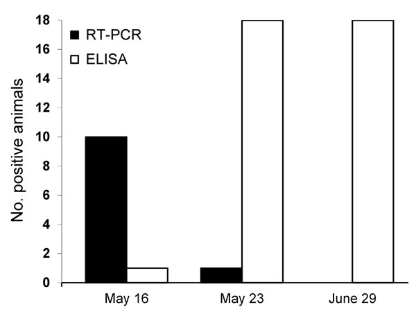 Number of cows positive for Schmallenberg virus according to reverse transcription PCR (RT-PCR) and ELISA, France, 2012.