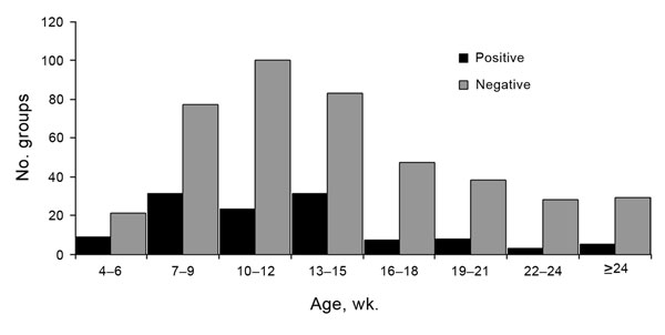 Age distribution of groups of pigs that were positive or negative for influenza A, determined by real-time reverse transcription PCR, midwestern United States, June 2009–December 2011.