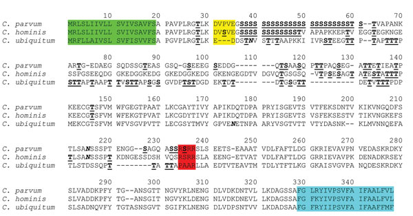 Deduced amino acid sequence of the gp60 gene of Cryptosporidium ubiquitum compared with sequences of C. parvum and C. hominis. gp60 sequences from C. ubiquitum, C. parvum (GenBank accession no. AF022929), and C. hominis (GenBank accession no. ACQ82748) were aligned by using ClustalX (www.clustal.org/). Potential N-linked glycosylation sites are indicated in boldface and italic type, and predicted O-linked glycosylation sites are indicated in boldface and underlined type. The first 19 aa coding f