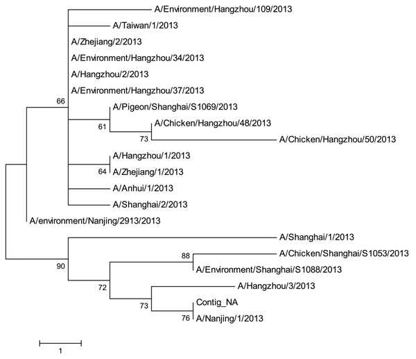 Phylogenetic tree of the influenza A (H7N9) viruses isolated in China in 2013, based on the neuraminidase gene segment. Scale bar indicates nucleotide differences per unit length.