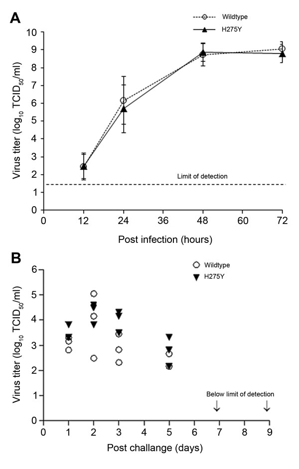 Replicative capacity of the oseltamivir-resistant highly pathogenic avian influenza A(H5N1) virus possessing the H275Y substitution and the wild type virus in (A) MDCK and MDCK-SIAT1 cell lines and (B) in the ferret upper respiratory tract; nasal washes were collected on days 1, 2, 3, 5, 7, and 9 post challenge. Of note, the limit of detection for virus titer was set at 1.3 x log10.