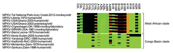 Heat map of MPXV proteins with rather low conservation. Shown is the comparison of protein length and identity. The degree of protein truncation is represented as a black bar. The differences in protein identity of the remainder of the proteins are represented by color gradation ranging from green (100% protein identity) to brown (≈50% protein identity) to red (0% protein identity). Only proteins with protein length or identity <95% are shown. Protein names are based on MPXV-Sankuru-Zaire-199