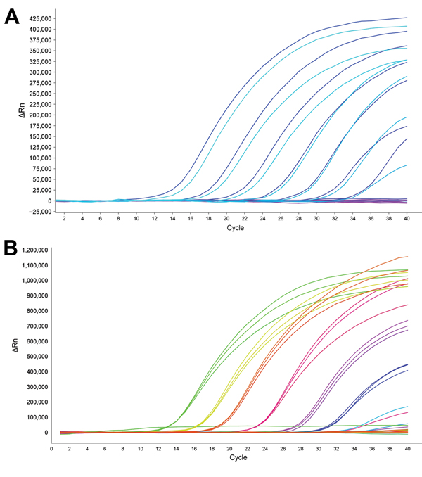 Dynamic range of reverse transcription PCR for detection of oseltamivir resistance in influenza A(H7N9) virus. Amplification curves (ΔRn vs. cycle number) for serial dilutions of plasmid with 292K (mutant) or R292 (wild-type) neuraminidase (NA) fragments. ΔRN is change in signal magnitude (reporter signal minus baseline signal). Assay dynamic range was linear at template concentrations of 102–108 copies/reaction. A) Detection of NA 292K mutant strain with probe N9-K: slope = −3.388, R2 = 0.997.
