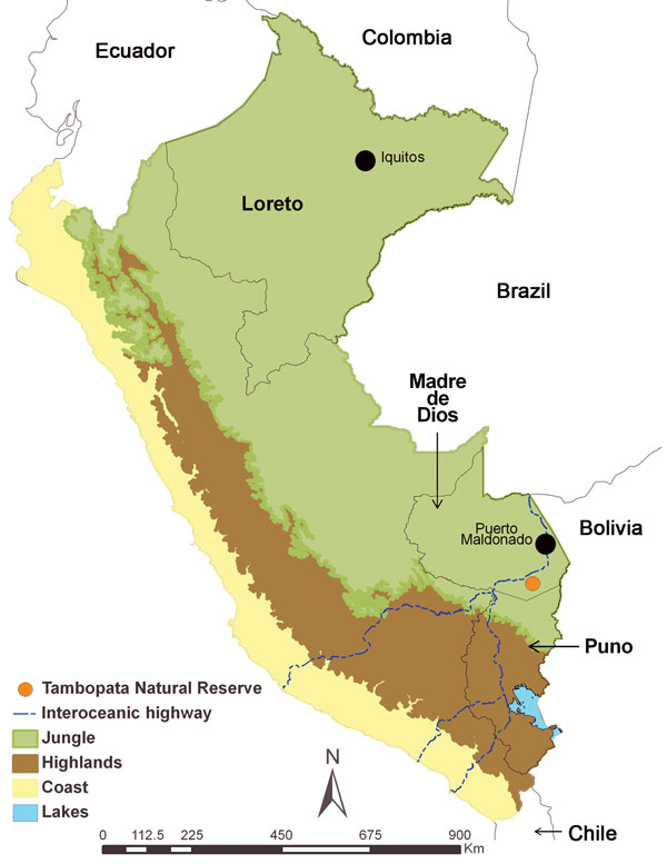 Regions of Peru, indicating areas of previous hantavirus study (Loreto [2]) and the study of hantaviruses described in this article (Madre de Dios and Puno). Capital cities of the Loreto and Madre de Dios Regions are indicated by black dots.
