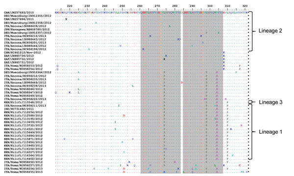 Alignment of unique deduced amino acid sequences from the combined dataset of sequences from the C-terminal third of the attachment protein of respiratory syncytial virus genotype ON1. The sequences are compared with the sequence for the earliest ON1 variant (from Ontario, Canada). The duplicated parent and the resulting regions are in gray.