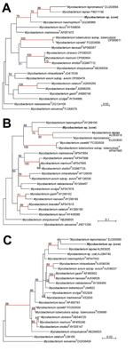 Thumbnail of A) Phylogenetic trees based on partial A) β-subunit of RNA polymerase, B) partial heat shock protein 65 sequences, and C) partial 16S rRNA gene sequences of Mycobacterium spp., Jura, France. Phylogenies were inferred by using PhyML (http://code.google.com/p/phyml/) with the general time reversible evolutionary model (7). Trees were rooted by using M. setuense as an outgroup. Strains isolated in this study are indicated in bold. Values along the branches are bootstrap values (bootstr