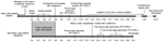 Thumbnail of Timeline of illness for family cluster of 2 patients with confirmed influenza A(H7N9) virus infection, Guangzhou, China, 2014. ICU, intensive care unit; rRT-PCR, real-time reverse transcription PCR; +, positive; –, negative.