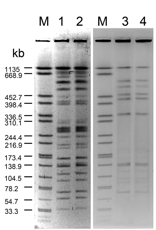 Pulsed-field gel electrophoresis patterns for Legionella pneumophila isolates from neonates with Legionella infection and hospital water sources. Genomic DNA was digested with SfiI and separated in 1% agarose gel by Bio-Rad CHEF MAPPER. Lane M, reference size maker (XbaI-digested genomic DNA fragments of Salmonella enterica ser. Braenderup H9812); lanes 1 and 2, clinical and environmental isolates of L. pneumophila serogroup 5 from case-patient 1; lanes 3 and 4, clinical and environmental isolat