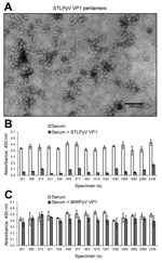 Thumbnail of STL polyomavirus (STLPyV) ELISA. A) Electron microscopy image shows purified STLPyV VP1 capsomeres. Scale bar = 100 nm. B) Serum samples were pre-incubated in the absence (white bars) or presence of soluble STLPyV VP1 pentamers (gray bars), followed by the STLPyV-capture ELISA. Serum was tested in triplicate, and average absorbance values are shown. Error bars indicate SD. Representative data are shown. C) Seroreactivity to STLPyV in the absence (white bars) or presence of competiti