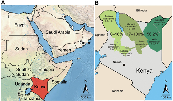 Greater Horn of Africa and Kenya. A) Arabian Peninsula and neighboring countries in the Greater Horn of Africa. B) Detailed map of Kenya showing sampling sites in 7 counties (Turkana, Baringo, Laikipia, Marsabit, Isiolo, Mandera, and Wajir) for Middle East respiratory syndrome coronavirus (MERS-CoV). Counties were assigned to 3 regions named after the former administrative provinces of Rift Valley, Eastern, and Northeastern (left to right). The 3 sampling regions are indicated in shades of green