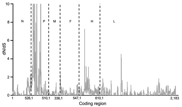 Mean ratios of nonsynonymous (dN) to synonymous (dS) substitutions per site of concatenated coding regions of peste des petits ruminants virus genome. Proportion of dS substitutions per potential dS site and proportion of dN substitutions per potential dN site were calculated by using the method of Nei and Gojobori (29) and the suite of nucleotide analysis program (www.hiv.lanl.gov). Vertical dashed lines indicate gene junctions with sliding windows of size = 5 codons. dN/dS values ≥ 10 are show