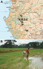 Thumbnail of Environmental survey. A) Gabon, showing location of the 8 sites from which soil was sampled to test for the presence of B. pseudomallei, July 2012–September 2012. B) Soil sampling site no. H, a rice field near Mouila village.