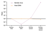 Thumbnail of Changes in virus-to-host nucleic acid signal-to-noise ratio during development of tissue-based universal virus detection for viral metagenomics (TUViD-VM) protocol. Next-generation sequencing results for virus-infected marmoset tissue comparatively sequenced were obtained by using 4 approaches: standard RNA library preparation (Monkey RNA), standard DNA library preparation (Monkey DNA), DNA library from random-amplified marmoset tissue (Monkey random), and DNA library from random-am