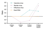 Thumbnail of Changes in virus-to-host nucleic acid signal-to-noise ratio during development of tissue-based universal virus detection for viral metagenomics (TUViD-VM) protocol. Next-generation sequencing results for virus-infected chicken tissue comparatively sequenced were obtained by using 4 approaches: standard RNA library preparation (Chicken RNA), standard DNA library preparation (Chicken DNA), DNA library from random-amplified chicken tissue (Chicken random), and DNA library from random-a