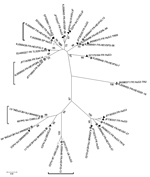 Thumbnail of Phylogenetic tree of hepatitis E virus (HEV) sequences identified in food samples, France, 2011. Phylogenetic tree including 16 HEV sequences detected in food samples (gray circles) and the closest human (black triangles, French origin; white triangles, British or Spanish origin) or swine (white squares) sequences was constructed by using the neighbor-joining method with a bootstrap of 1,000 replicates based on the ClustalW alignment (MEGA4, http://www.megasoftware.net) on 290 nt se