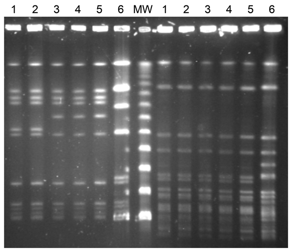 Pulsed-field gel electrophoresis patterns of 6 Listeria monocytogenes serotype 1/2b isolates collected from listeriosis patients in Gipuzkoa, northern Spain, during January 2013–February 2014. Left side, after AscI restriction; right side, after SmaI restriction. Lanes 1 and 2, isolates from first outbreak (pattern A); lanes 3, 4 and 5, isolates from second outbreak (pattern B), including (lane 5) 1 isolate from a food product of foie gras; lane 6, L. monocytogenes sequence type 3 serotype 1/2b