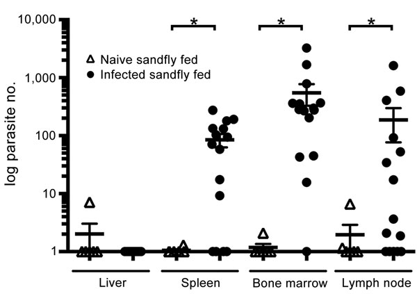 vectorborne transmission of leishmania infantum from hounds  united states