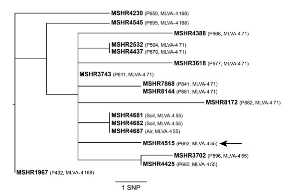 Whole-genome core orthologous single nucleotide polymorphism (SNP) phylogeny of sequence type 562 B. pseudomallei isolates from a patient with melioidosis and from environmental sampling at the patient's residence, Darwin, Northern Territory, Australia. MSHR4515 (MLST database identifier, http://bpseudomallei.mlst.net/) was a blood culture isolate from the index patient, identified as patient (P) 692 (P692, arrow). Analysis of isolates from 13 other patients with sequence type 562 are also shown