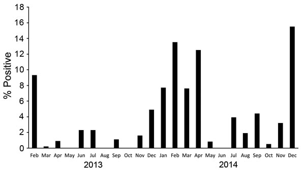 Monthly positivity rate of infection with avian influenza viruses (all types), Egypt, February 2013–December 2014. As in Figure 1, a seasonal pattern is shown by sharp increases in rates during colder months (November–March).