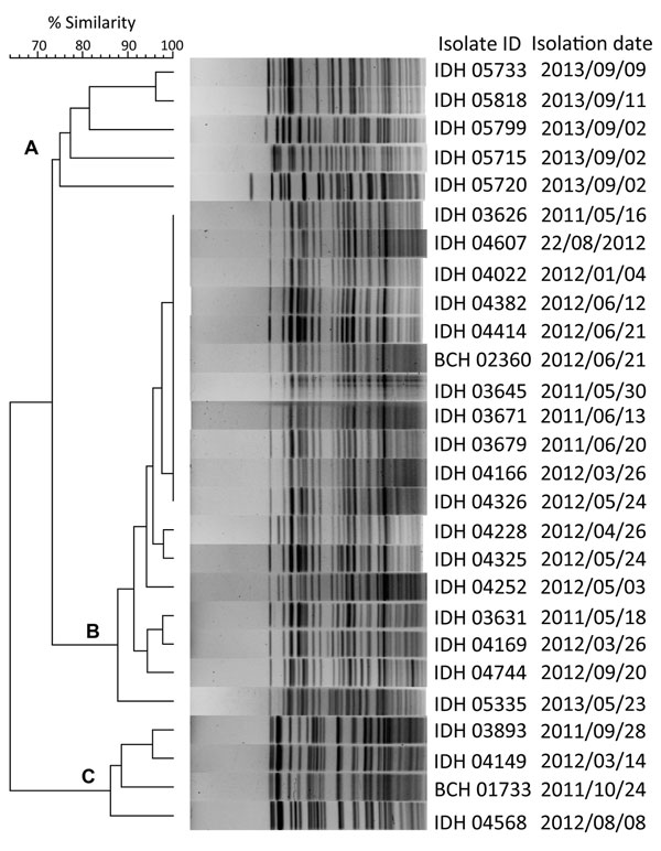 Pulsed-field gel electrophoresis analysis of NotI-digested genomic DNA of blaNDM-1 harboring V. fluvialis isolates in study of diarrheal fecal samples from patients in Kolkata, India, May 2009–September 2013. In the dendrogram, 3 distinct clusters (A–C) formed on the basis of the band similarity. Isolate identification (ID) includes name of associated hospital: IDH, Infectious Diseases Hospital; BCH, B.C. Roy Memorial Hospital for Children. blaNDM-1, New Delhi metallo-β-lactamase.
