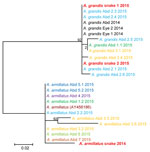 Thumbnail of Molecular phylogenetic analysis of Armillifer spp. sequences obtained from humans and snakes in Sankuru District, Democratic Republic of the Congo, 2014–2015. Parasite cytochrome oxidase subunit I gene sequences from abdominal (Abd) surgery patient specimens (larval parasites) and from snake meats for sale at local markets (adult parasites) are shown. Human cases are numbered according to the patient and cyst numbers shown in the Table. Sequences obtained from the same patient share