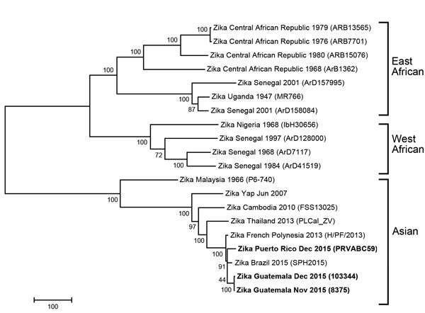 Phylogenetic tree of Zika virus isolates identified from Guatemala and Puerto Rico in December 2015 (indicated in boldface) compared with reference isolates obtained from GenBank. The isolates from Guatemala and Puerto Rico grouped with other Asian genotype viruses. The tree was derived by neighbor-joining methods (bootstrapped 1,000 times) using complete-genome sequences. Location, year identified, and GenBank strain identification for the viruses used in tree construction are shown. Scale bar