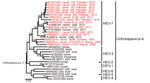 Thumbnail of Phylogenetic analysis of Orthohepevirus A sequences. The analysis comprised partial hepatitis E virus (HEV) sequences (283 nt from the RNA-dependent RNA polymerase region) from this study, representatives of Orthohepevirus A genotypes 1–7 and Orthohepevirus C (GenBank accession no. GU345042) as an outgroup. The phylogenetic tree was calculated with MEGA 6.0 (http://www.megasoftware.net) by using the neighbor-joining algorithm and a nucleotide percentage distance substitution model.