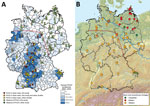 Thumbnail of Geographic distribution of Puumala virus (PUUV)–positive and PUUV-negative bank voles in Germany (A) and assignment of bank voles to the evolutionary lineages Western, Eastern, and Carpathian (B). The coloration of the map in panel A was generated on the basis of the human PUUV incidence per district (2). PUUV detection in previous studies was extracted from (3–7). The identification of the bank vole evolutionary lineages shown in panel B was determined by using partial cytochrome b