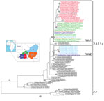 Thumbnail of Maximum-likelihood phylogenetic tree of the hemagglutinin gene segment of highly pathogenic avian influenza (H5N1) viruses from West Africa. Strain colors indicate country of collection (inset). The 2 identified groups (WA1 and WA2) are indicated by boxes (black and gray, respectively). Clades are indicated at right; sequences from the 2006–2008 epidemic (clade 2.2) in West Africa were used as an outgroup. Numbers at the nodes represent bootstrap values >60%, obtained through a n