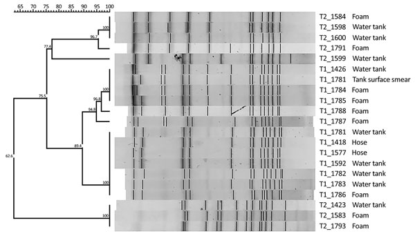 Dendrogram generated by FPQuest software showing the pattern of SfiI bands for isolates of Legionella pneumophila from 2 street cleaning trucks, Barcelona, Spain, 2015. Strains are identified with code of truck of origin (T1, T2) and an internal number. Scale bar represents Dice similarity coefficient percentage.