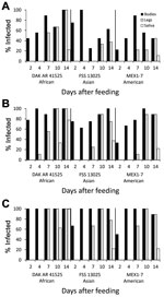Thumbnail of Infection, dissemination, and transmission of 3 Zika virus strains by Aedes aegypti mosquitoes from the Dominican Republic after artificial blood meals with a concentration of 4 log10 (A), 5 log10 (B), or 6 log10 (C) focus-forming units/mL.