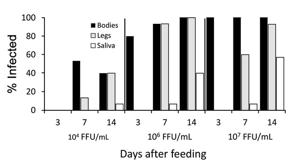 Infection, dissemination, and transmission of the Zika virus strain FSS 13025 by Aedes aegypti mosquitoes from Salvador, Brazil, after blood meals from infected A129 mice with viremic titers of 4 log10, 6 log10, or 7 log10 focus-forming units/mL.