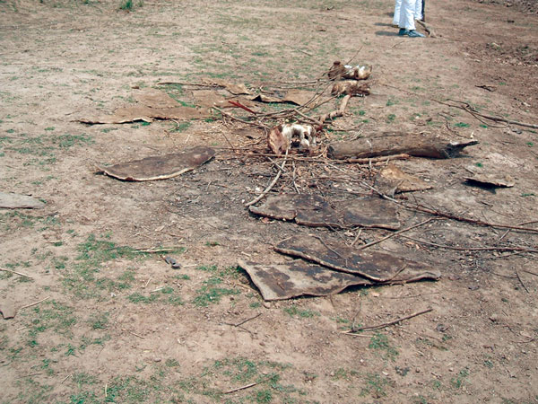 Hippopotamus bones and hides left behind after butchering of animals that were found dead on a river bank and later identified as the source of anthrax causing an outbreak among humans in northeastern Zambia, 2011.