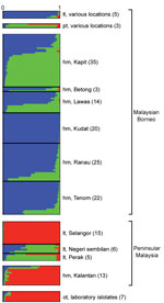 Thumbnail of Subpopulation cluster assignments of individual Plasmodium knowlesi infections in human and macaque hosts across Malaysia and 7 laboratory isolates. The Bayesian-based STRUCTURE analysis with LOCPRIOR model (22) was applied on complete 10-microsatellite loci of 166 P. knowlesi infections and 7 laboratory isolates showing 3 subpopulation clusters (K=3; ΔK=37.72). Ancestral population clusters are referred to as cluster 1 (blue), cluster 2 (green), and cluster 3 (red). Numbers in